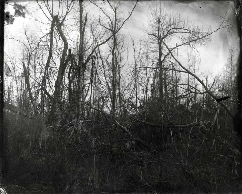 Tangled Tree Limbs, Louisiana, 2008