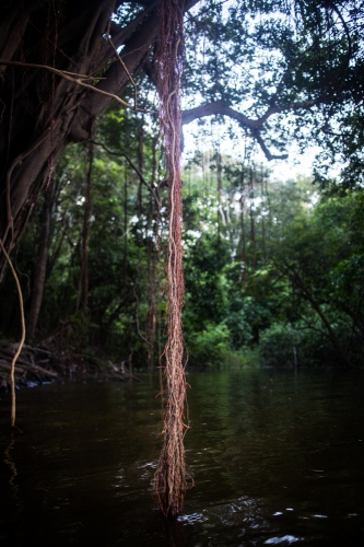 Days in the Amazon