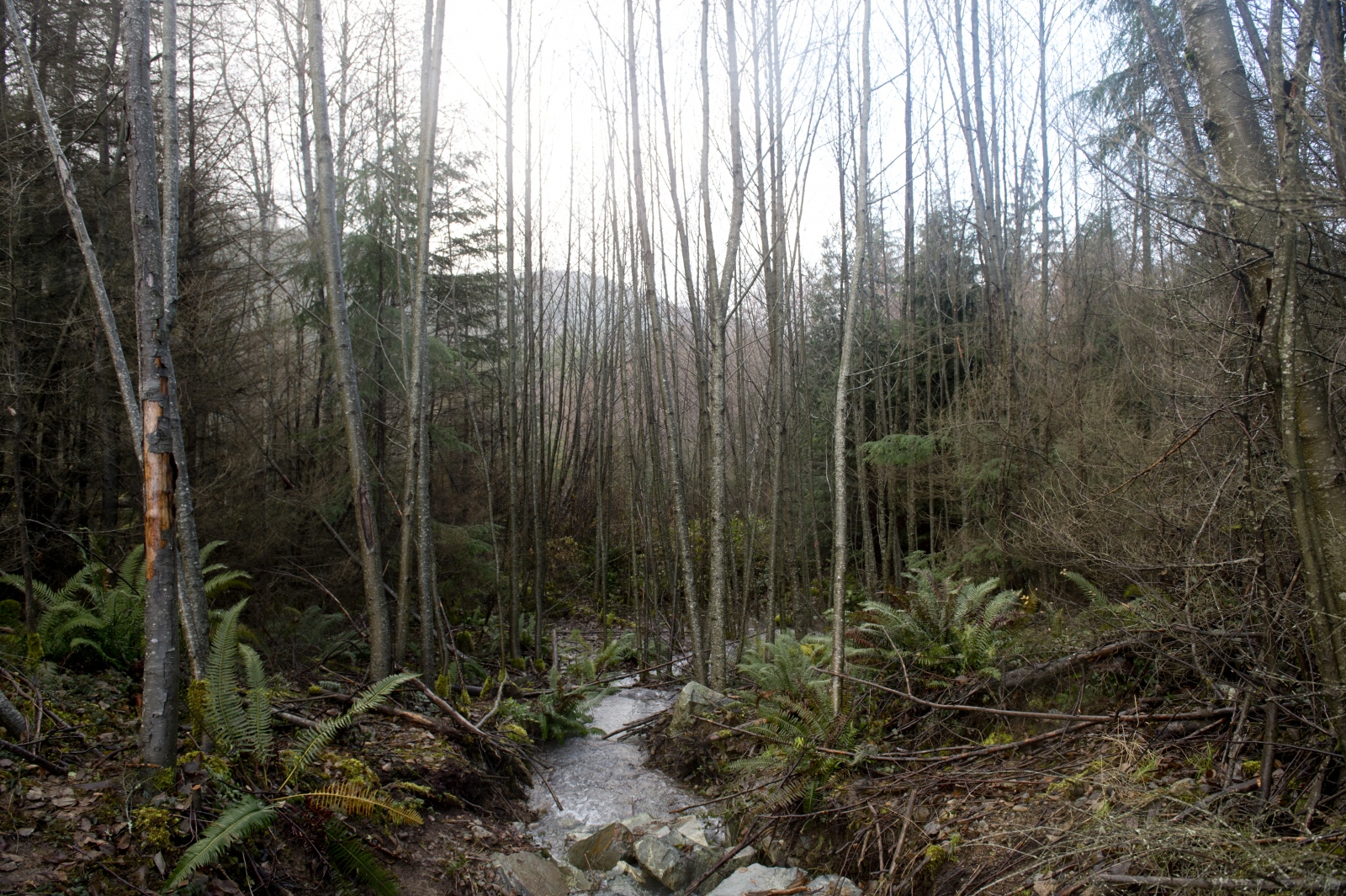 "Water flows from the South Island Resource Management site into an ephemeral stream on the western perimeter of the site on Dec. 9, 2015. The stream flows directly into Cowichan Valley Regional District land. As per the permit, all water — including contact water, or water that has come into contact with contaminants — is to be treated before being discharged into the ephemeral stream. The stream joins Shawnigan Creek, which flows directly into Shawnigan Lake. Residents are concerned water is not being treated properly prior to being discharged in the stream, where a breach occurred on Nov. 13, 2015. The breach led to a ""no water use"" advisory from the Vancouver Island Health Authority, affecting residents on the southern end of Shawnigan Lake."