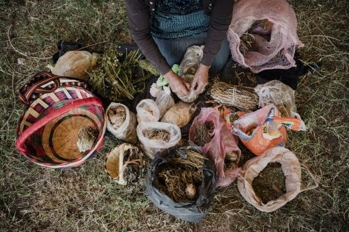 A herbal healer selling her pharmaceutical herb production in Tehuacan, Puebla , Mexico