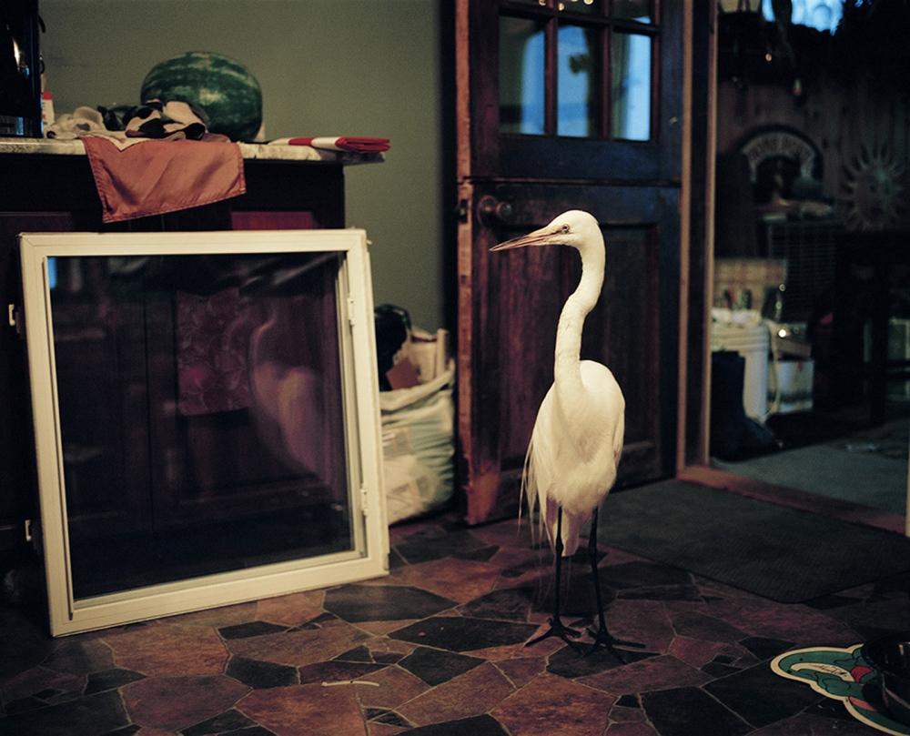 Art and Documentary Photography - Loading MDrennan_Egret.jpg