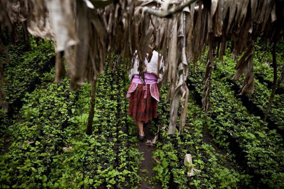 Art and Documentary Photography - Loading GreenHunger005.jpg