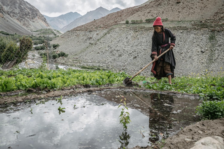 Tsering 'Dolker' Fomsapa, an elder of the Domkhar community, tends to her crops outside her house.