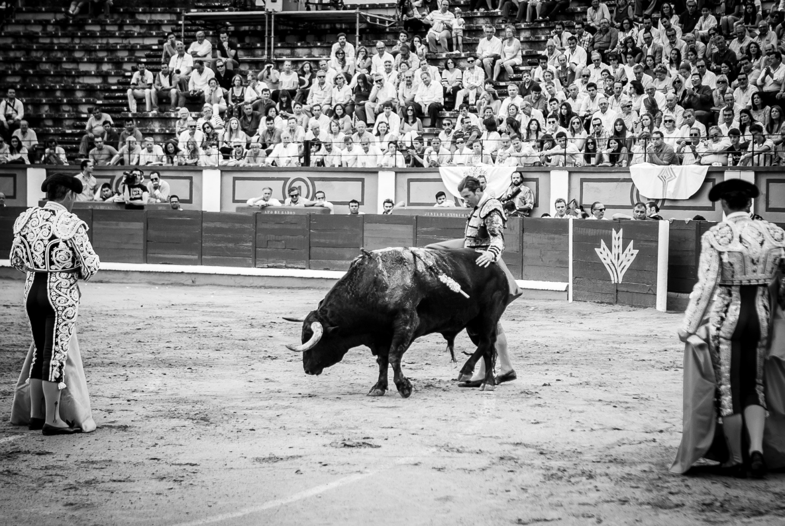 Art and Documentary Photography - Loading Oto_Bullfight_13.jpg