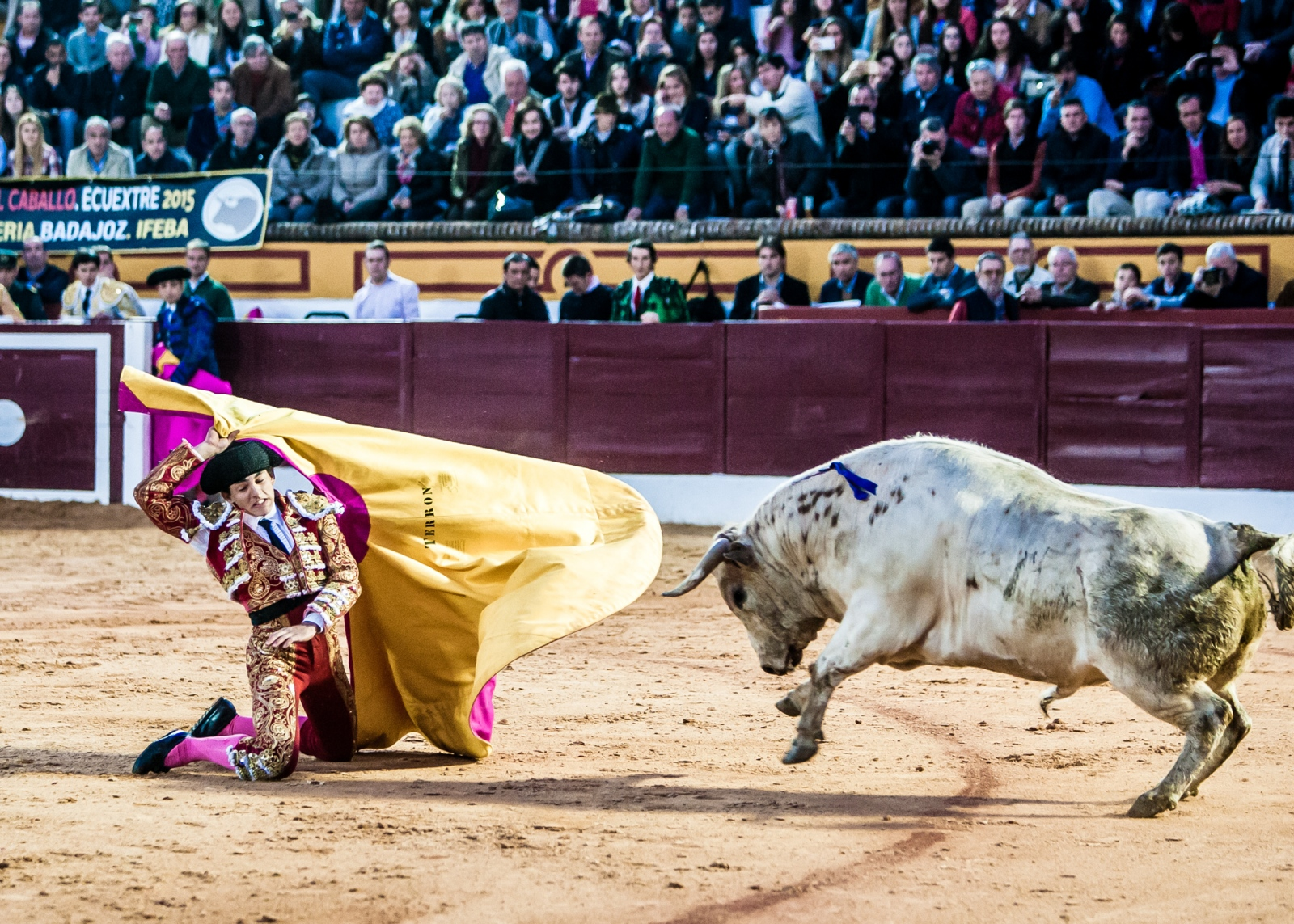 Art and Documentary Photography - Loading Oto_Bullfight_05.jpg