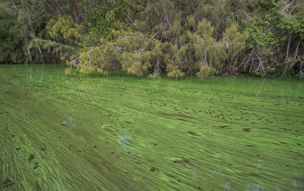 Photography image - Loading 23-Mile_Cyanbacteria_Bloom_Caused_by_Releases_from_Lake_Okeechobee_Following_Heavy_Storms_Associated_with_Climate_Change.jpg