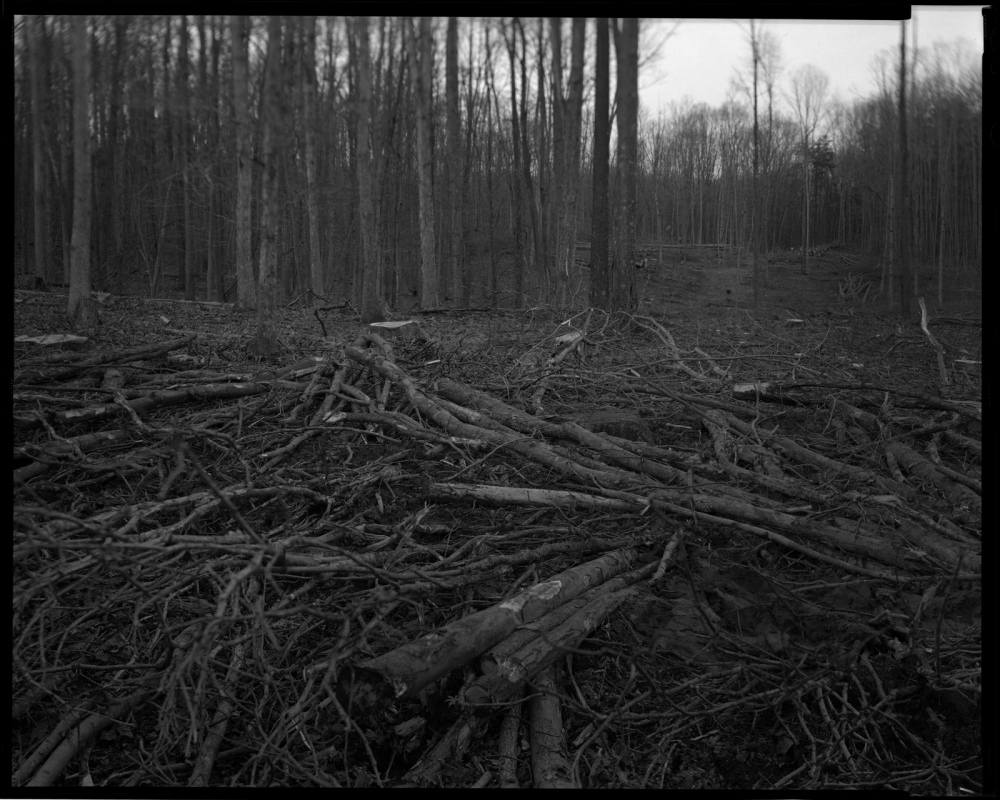 Photography image - Loading clearcut2.jpg