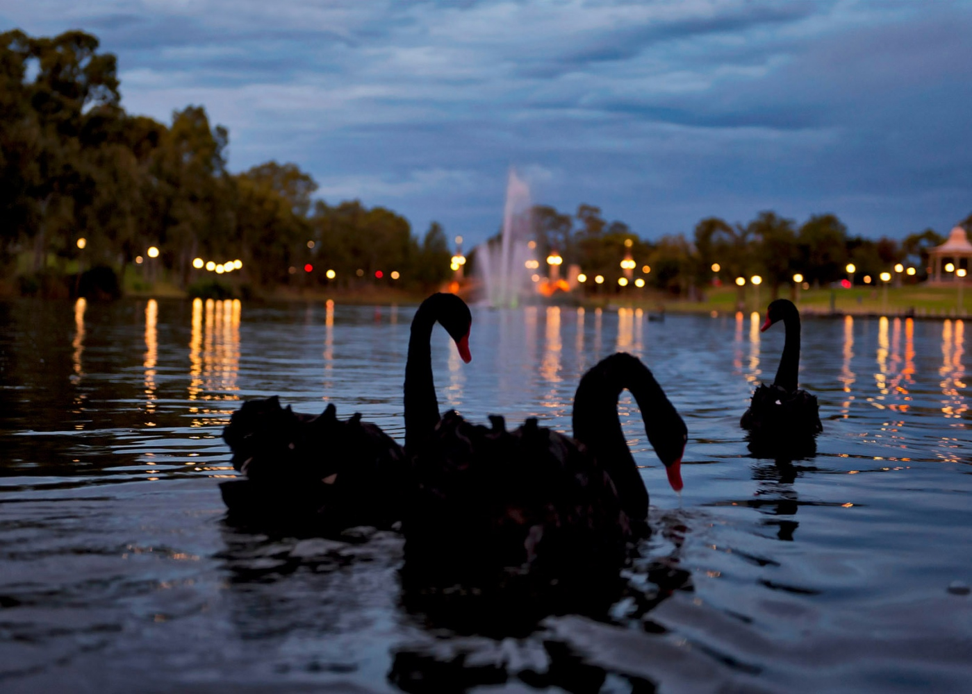 Torrens, Adelaide, S.A.
