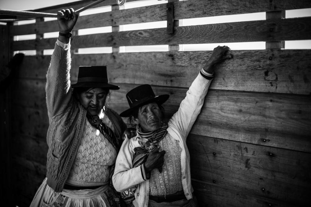 Photography image - Chaccu de Vicuñas in Ayacucho, Peru. 2015.