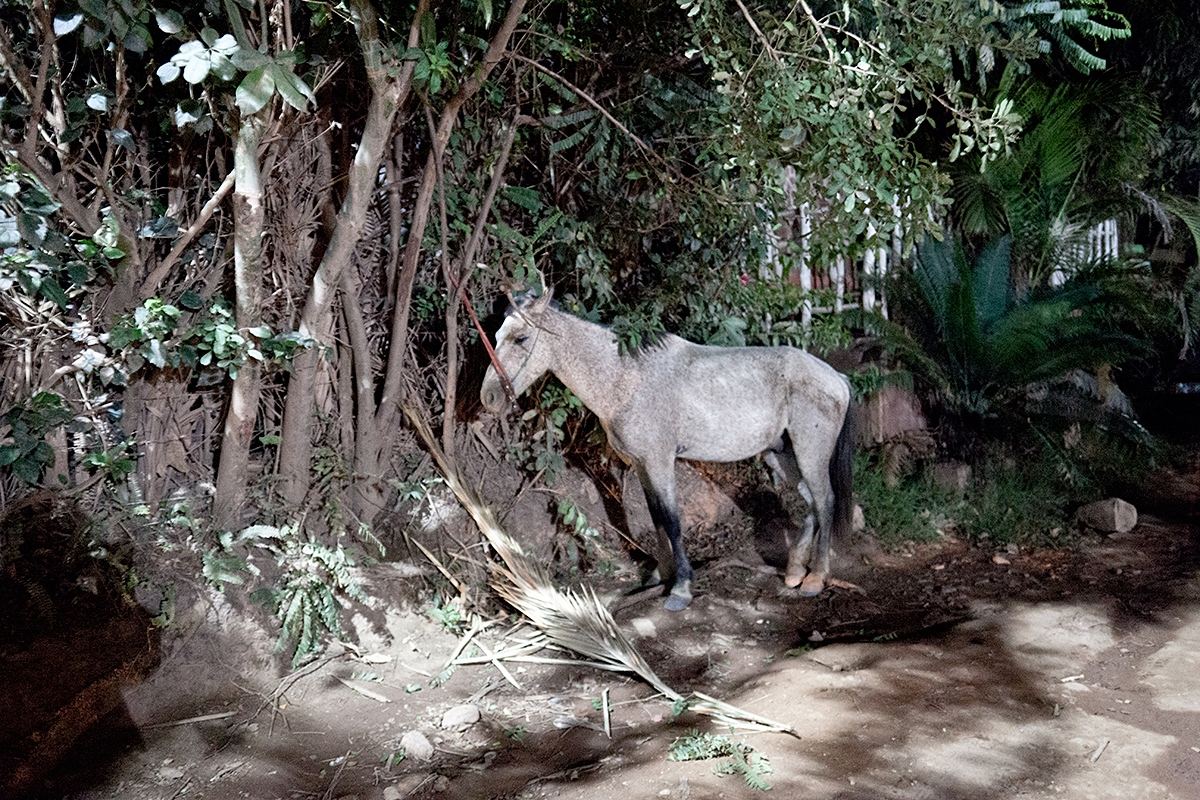 Horse, Chapada Diamantina.