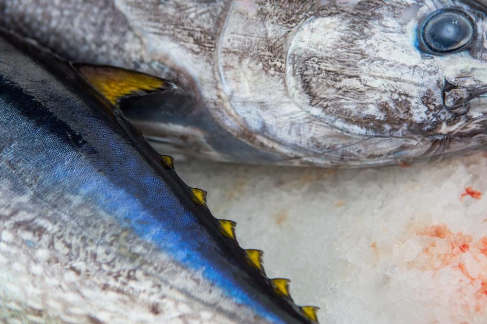Photography image - Loading Fisheries011.jpg