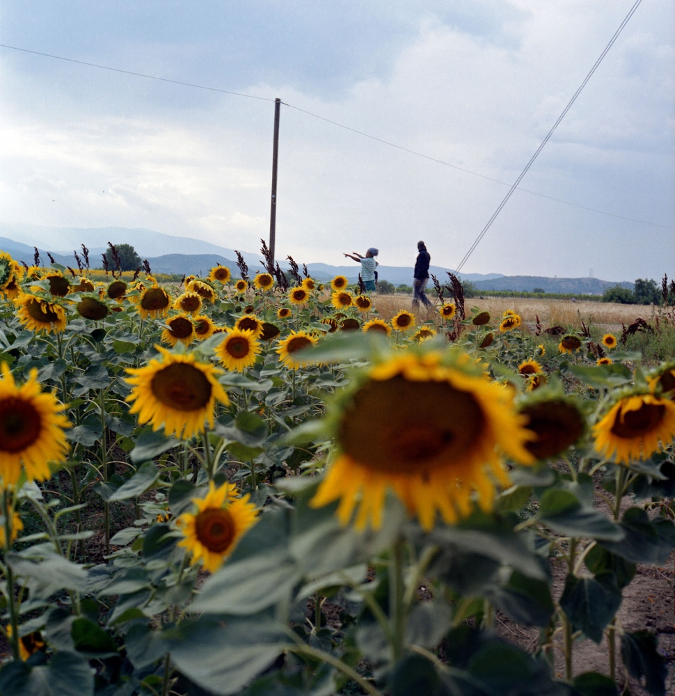 Migrant family from South Sudan walking in the sunflower field in Idomeni, a crossing point between Greece and Macedonia where roughly around 400 migrants per day waited at the border for a chance to cross.