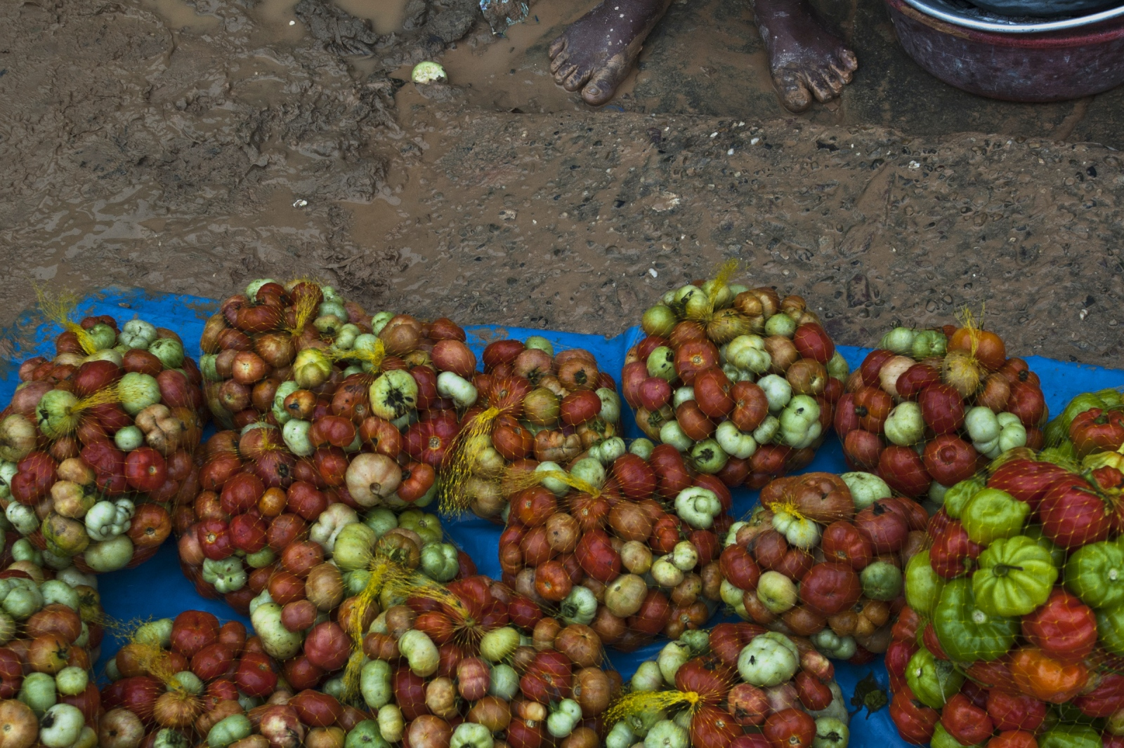 Art and Documentary Photography - Loading JOANATORO_agriculture_and_envioroment014.jpg