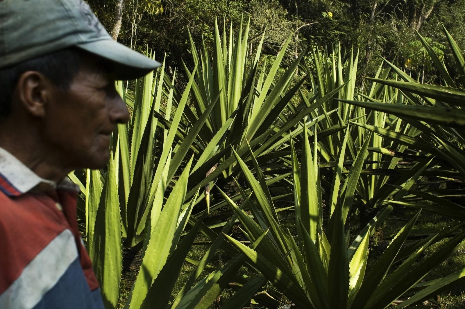 Art and Documentary Photography - Loading JOANATORO_agriculture_and_envioroment028.jpg