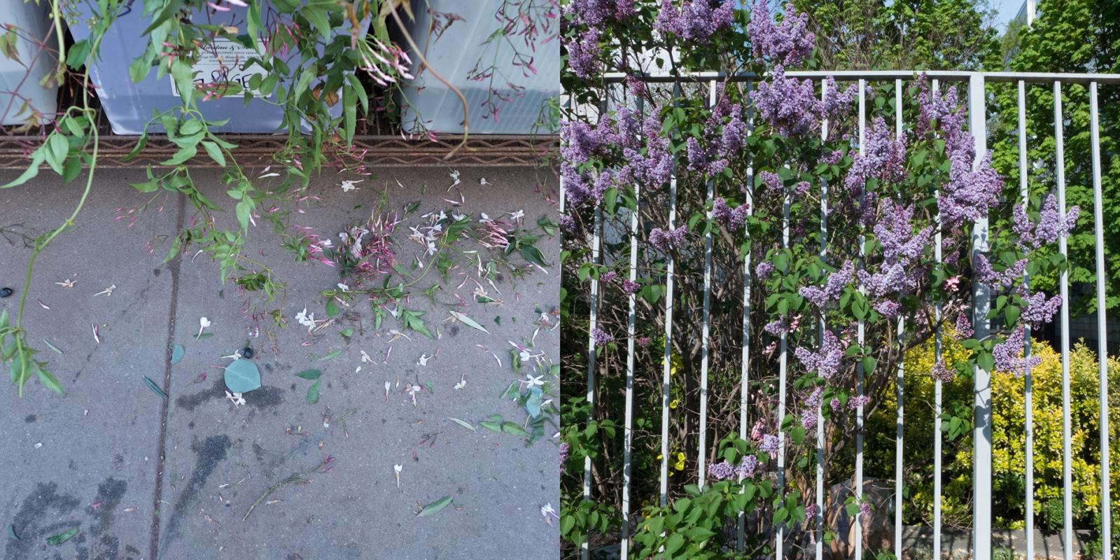 Art and Documentary Photography - Loading flowers28th-prattspring_for_V.jpg