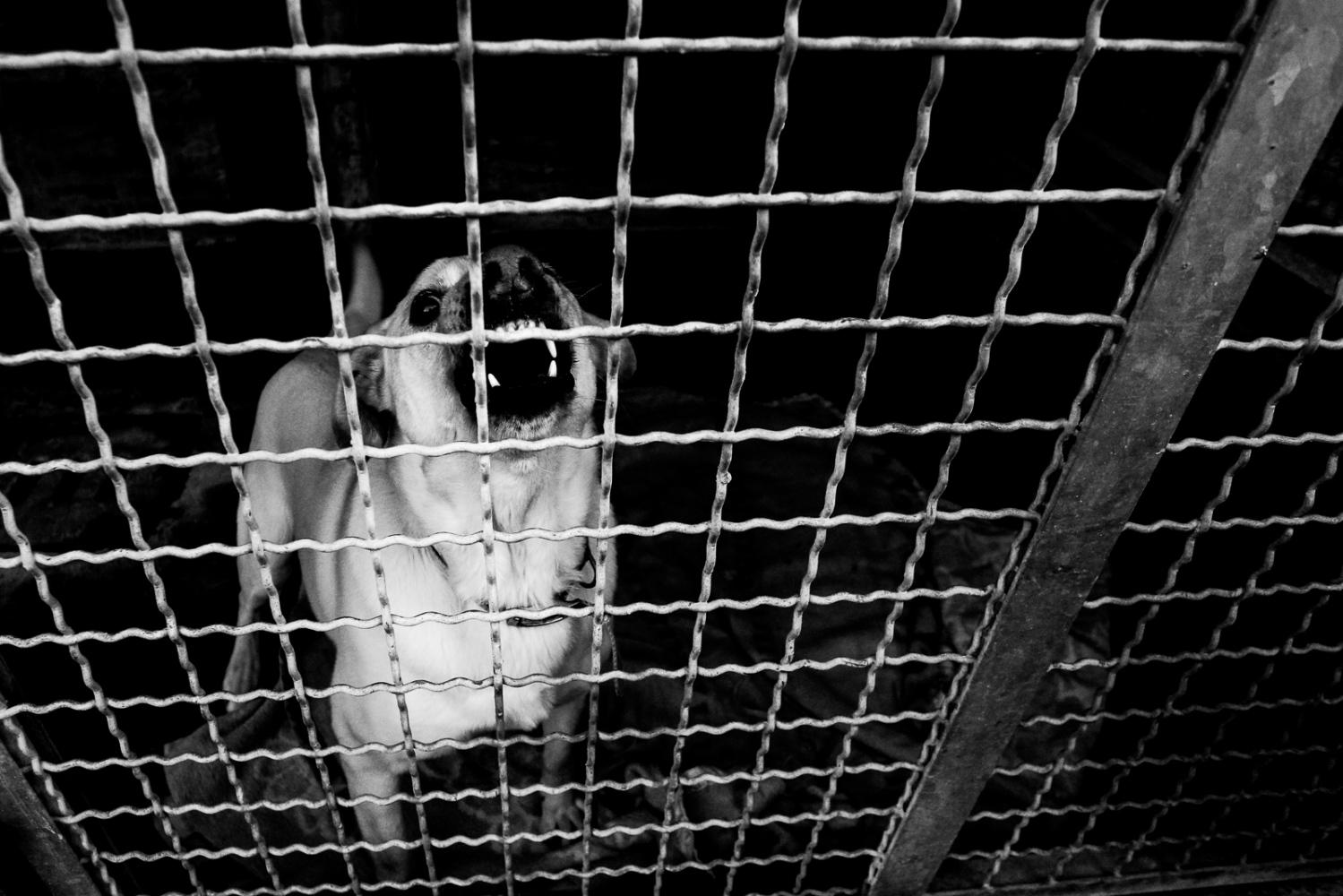 Dog inside the Bologna kennel