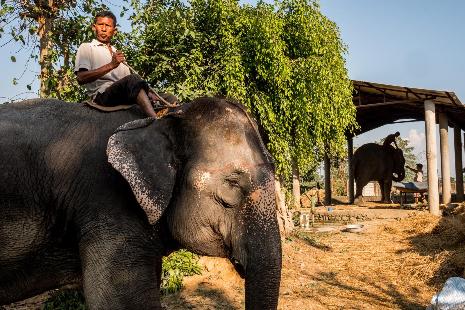Elephants. Chitwan, Nepal.