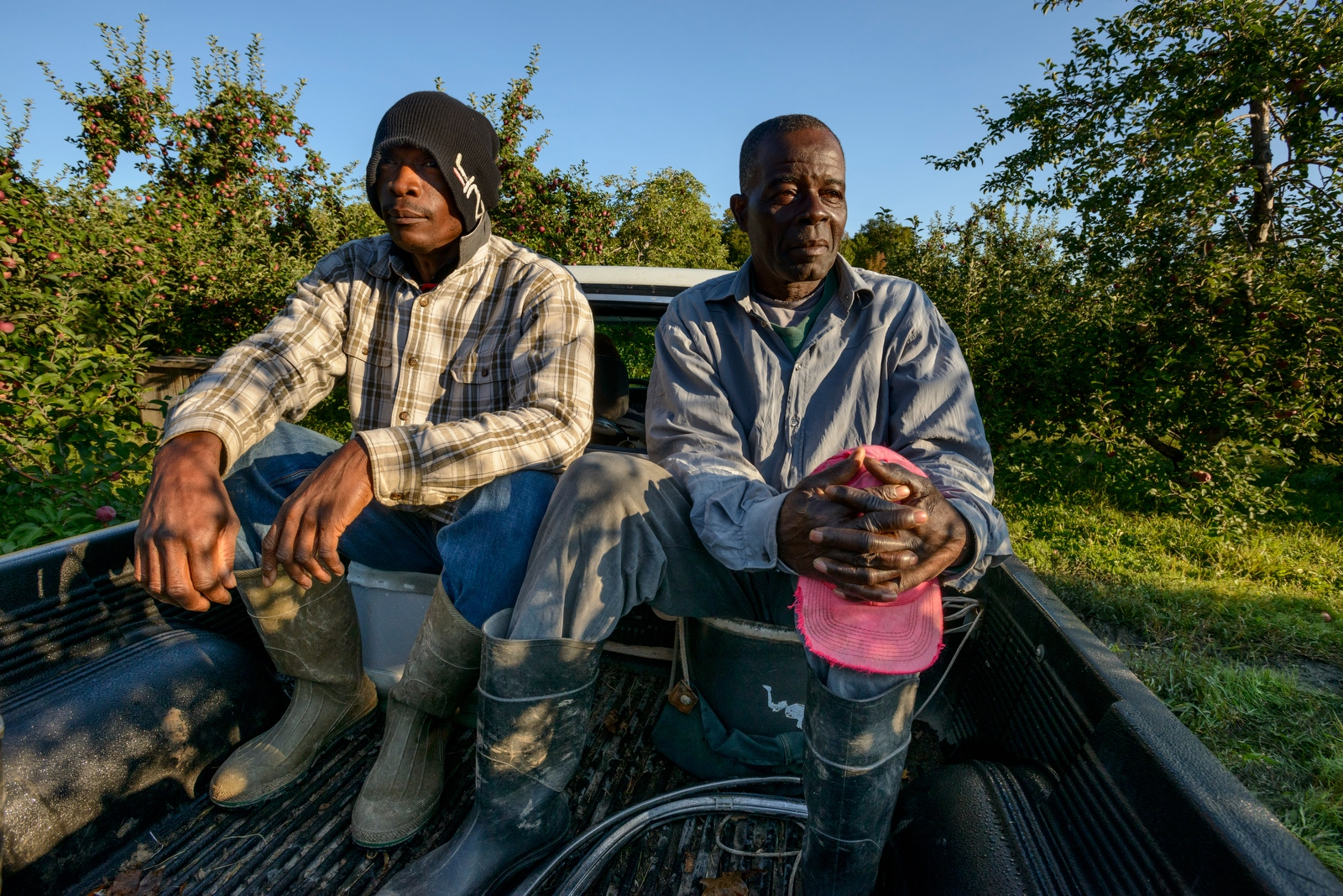 Howard Henningham and Frederick Welcome of Clarendon, Jamaica ride in the back of a pickup truck into the fields to pick apples at Sunrise Orchards, Cornwall, Vermont.