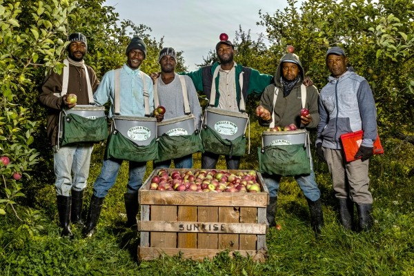 Jamaicans Carlington Senior of St. Elizabeth, Collington Wallace of St. Catherine, Anthony Stephenson of Manchester, Mark Williams of Chilani, Chris Tate of St. Elizabeth, and Walter Hamilton of Hanover are Apple Pickers at Sunrise Orchards, Cornwall, Vermont.