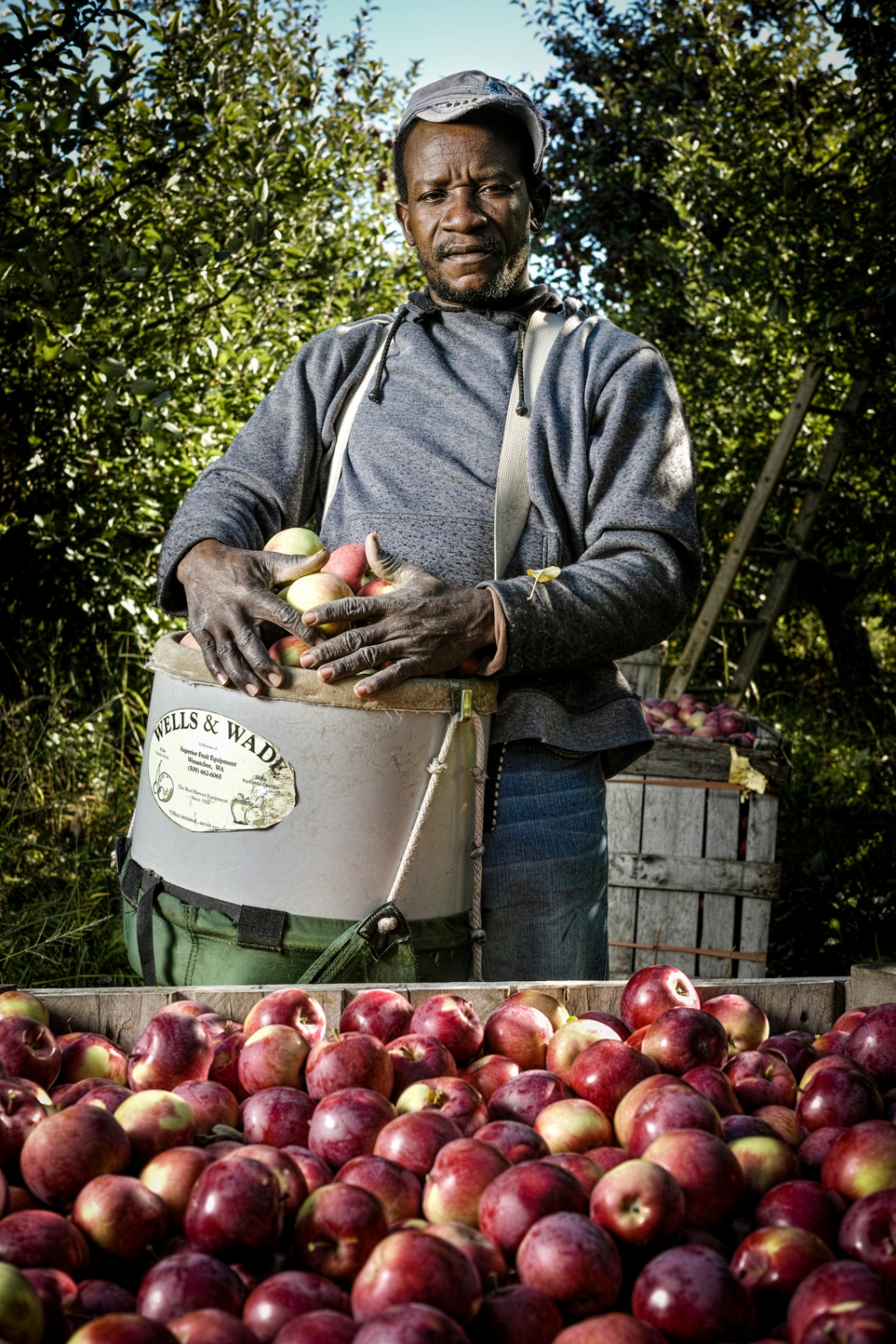Willoughby Thomas of St. Ann, Jamaica is an apple picker at Sunrise Orchards, Cornwall, Vermont.
