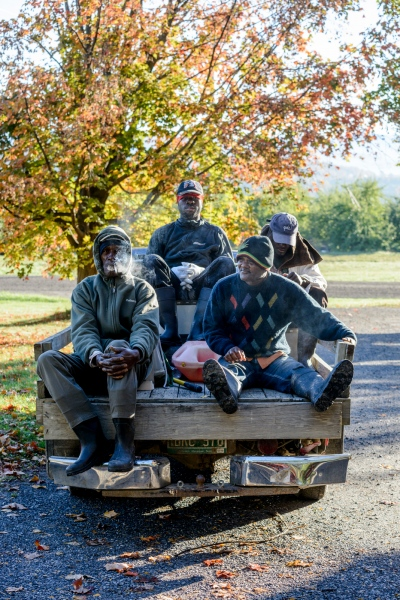 Jamaicans Baltimore Thompson of St. Mary, Kenroy Corrodus of St. Elizabeth, Hernal Richards of Clarendon, and Rodger Moore of St. Thomas ride a pickup truck at the start of day at Sunrise Orchards, Cornwall, Vermont.
