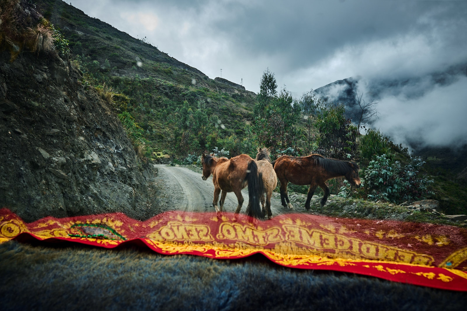 Wild horses block the road in the Lares Valley, Peru.