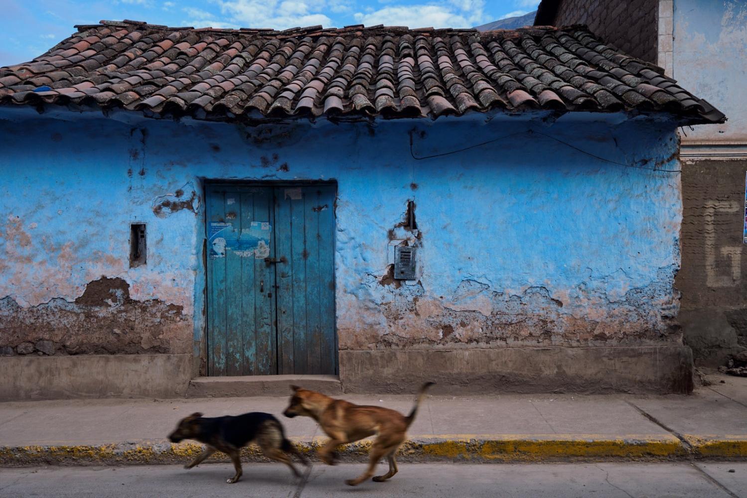 Street dogs, Calca, Peru.