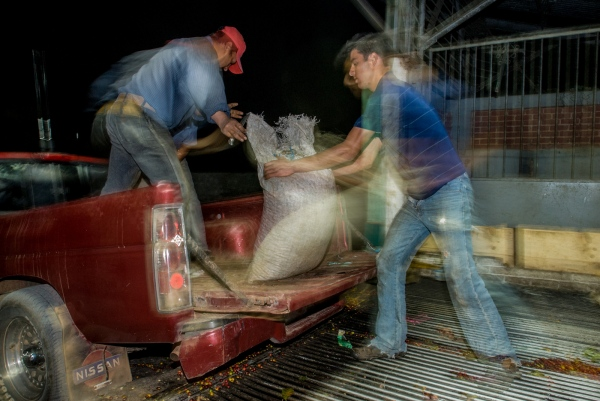 Workers process a late night coffee delivery at the loading dock of the Huatusco Coffee Cooperative, Veracruz, Mexico.