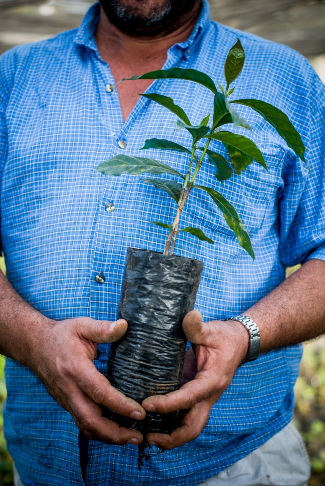 Coffee farmer Rolando Cesa holds a coffee plant at his organic coffee plant nursery, Huatusco Coffee Co-op, Veracruz, Mexico.