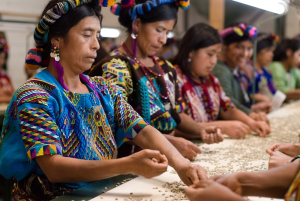 Mayan workers, Chajul Coffee Co-op, Quiché, Guatemala.