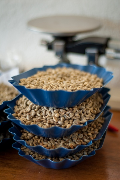 Processed coffee beans await quality control testing, Coffee Lab, Chajul Coffee Co-op, Quiché, Guatemala.