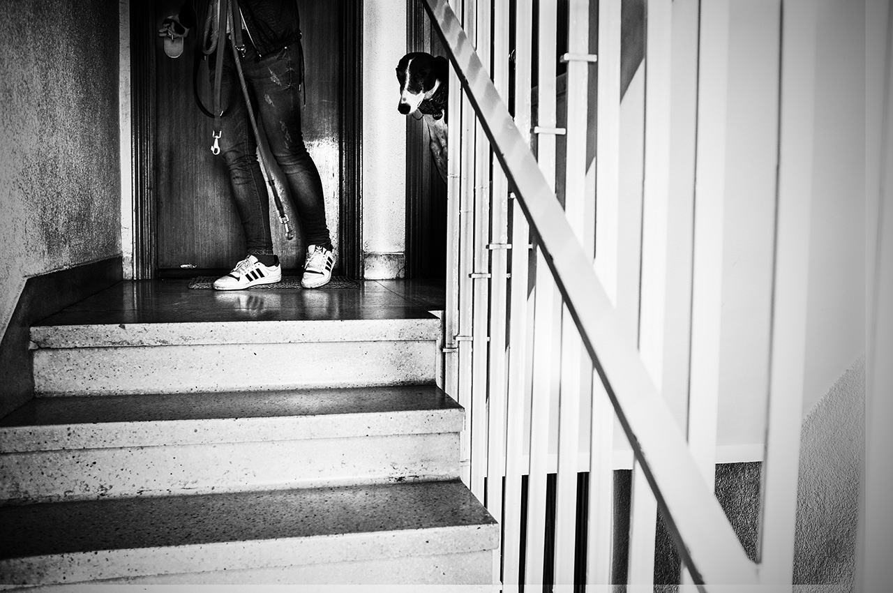 "Trivial things as the elevators or the steps uses to be barriers to these dogs that usually live in more uncomfortable ambients. ( Adoptated "" Daga "" ) Madrid. Spain"