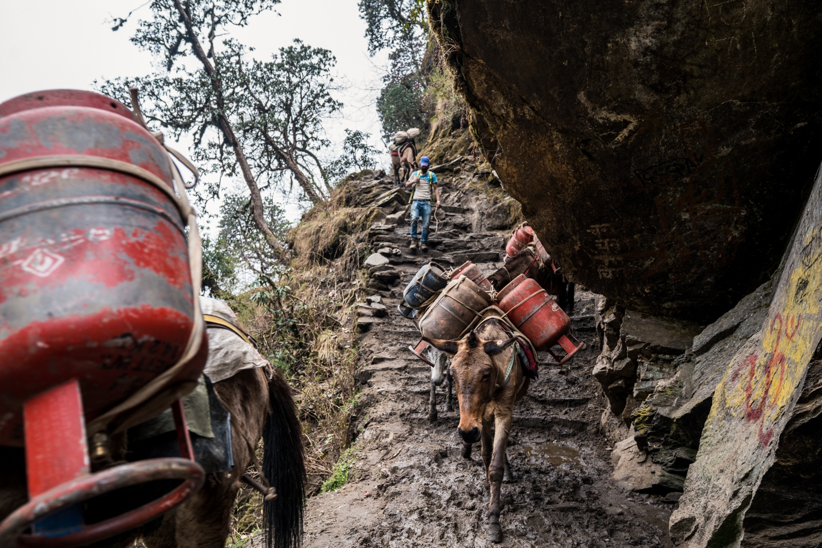 Mules carry empty gas canisters to a village that is close by to a road. While the use of gas is becoming increasingly common, it still remains expensive and difficult to transport. The majority of homes still use wood.