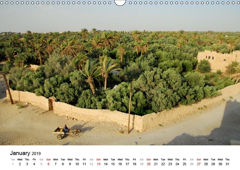 Palmyra - palm oasis