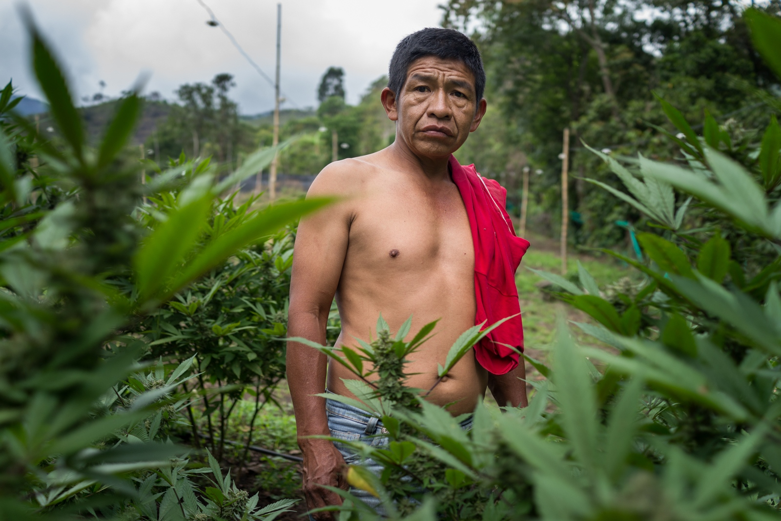 Sebastian, born in Toribio is one of the several inhabitants of the municipalityof Toribio that grows marijuana illegally in Colombia. he sells his product to local clients who afterwards will either sell it nationally or export it to Trinidad & Tobago, Puerto Rico or Panama.