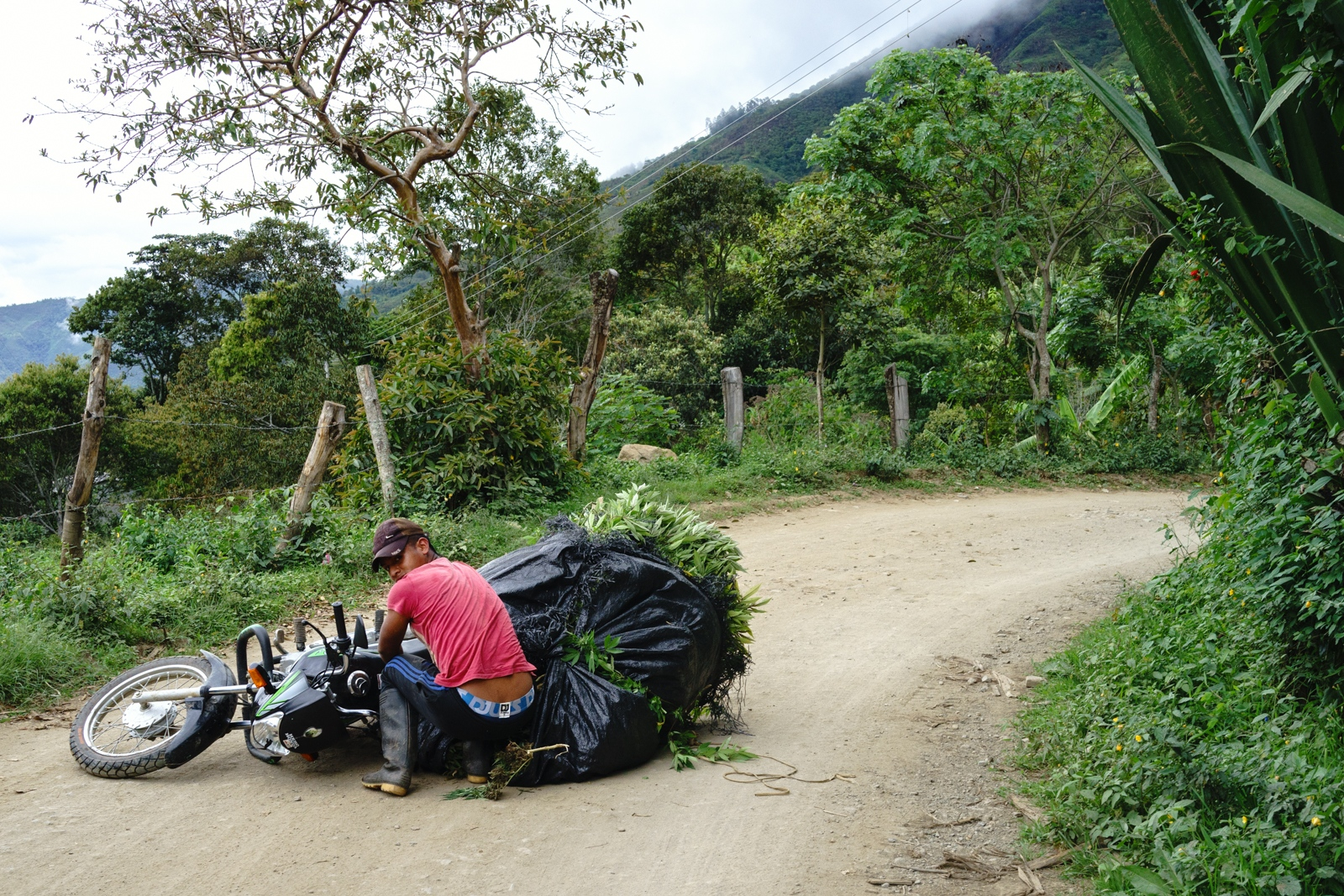 a young man lost the control of his motorcycle on a curve while carrying marijuana from a field to an oven at a neighbours house, Motorcycles and horses are the main transportation method for marijuana within the town of Toribio.
