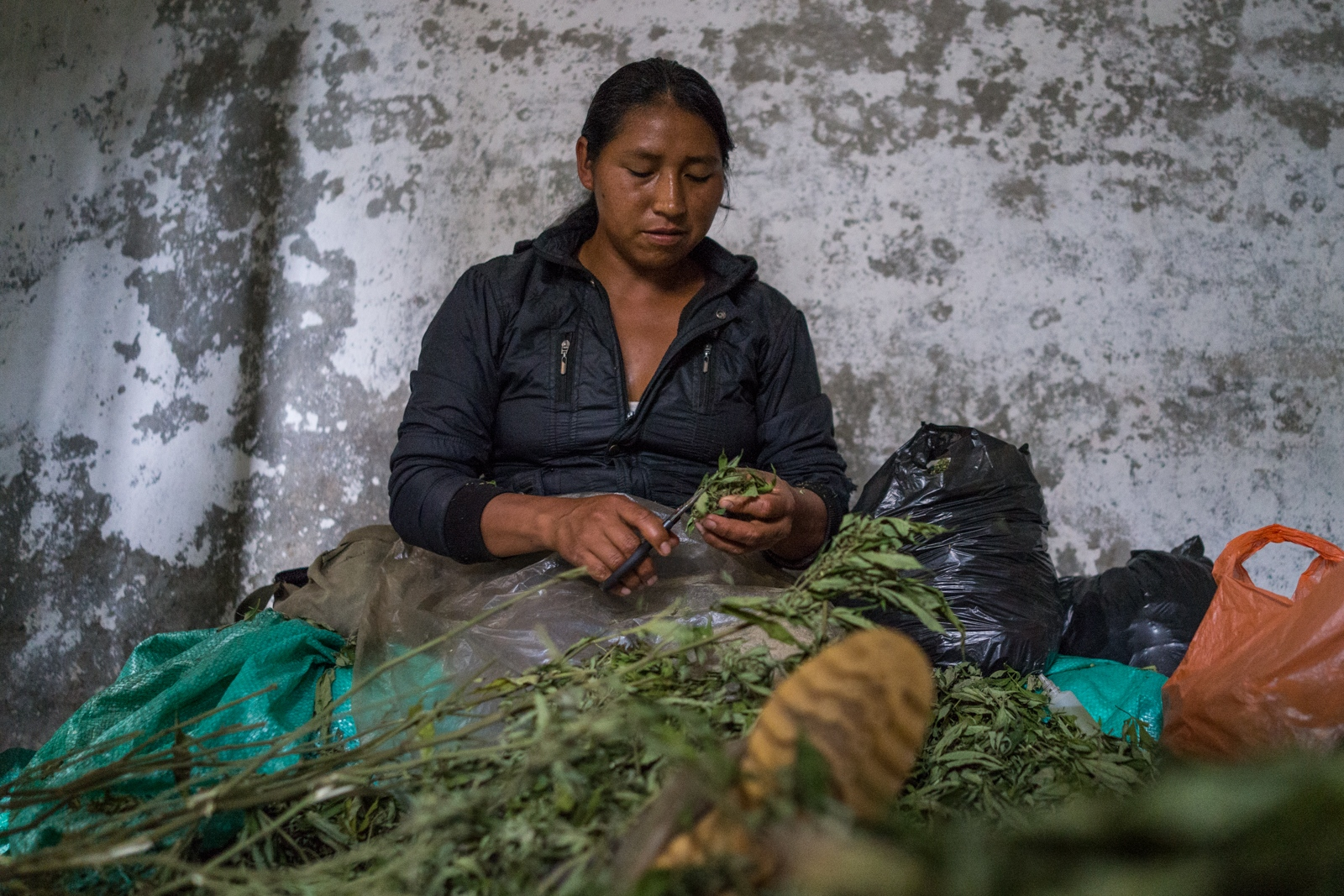 Maria cuts marijuana leaves out of the buds, clients only buy buds qithoutthe leaves which decreases the weight but gives more quality to the marijuana, cutting leaves out of marijuana buds is a job only for kids and women in Toribio since man decide to be more in charge of the sales and plantation.