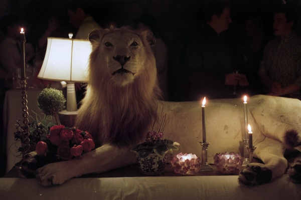 A taxidermied lion, New York, NY