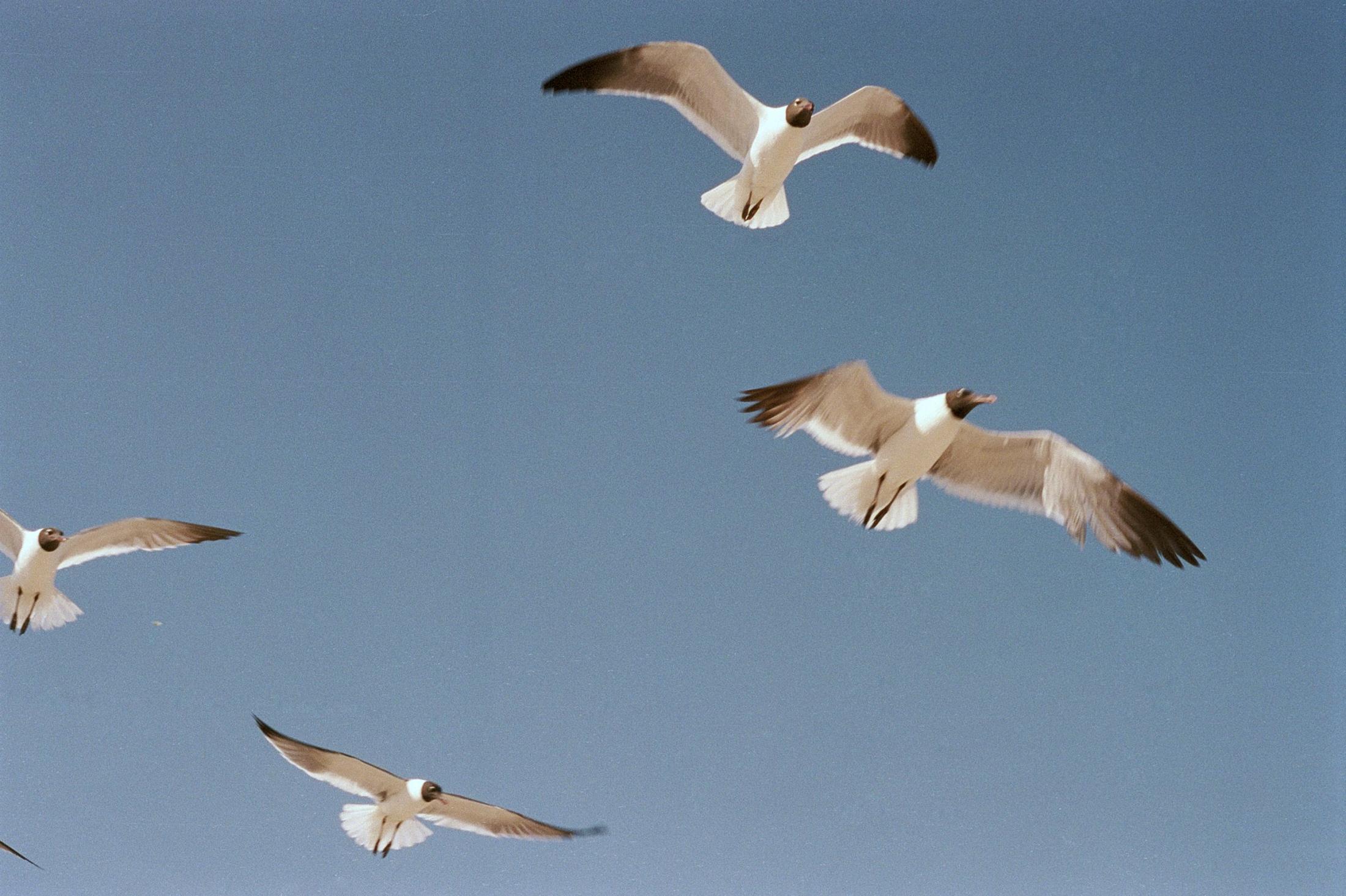 Birds at the beach, New York, NY