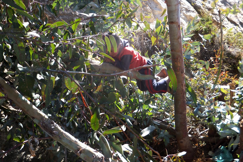 Acá mi hijo Edilson, el mayor, estaba trepando porque le gustan las películas que pelean, trepan, igual de los árboles, como los monos, ahí estaba colgándose.