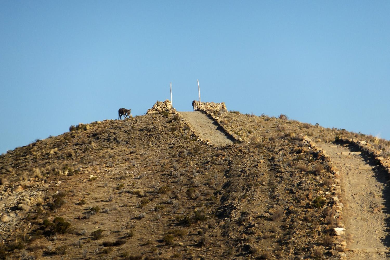 Arriba de mi casa hay un camino, donde yo he nacido, ahí donde está el burrito Pepe.