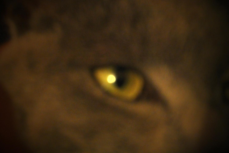 Es como meterse dentro del ojo del gato, que parezca la luna, que está mirando la luna.