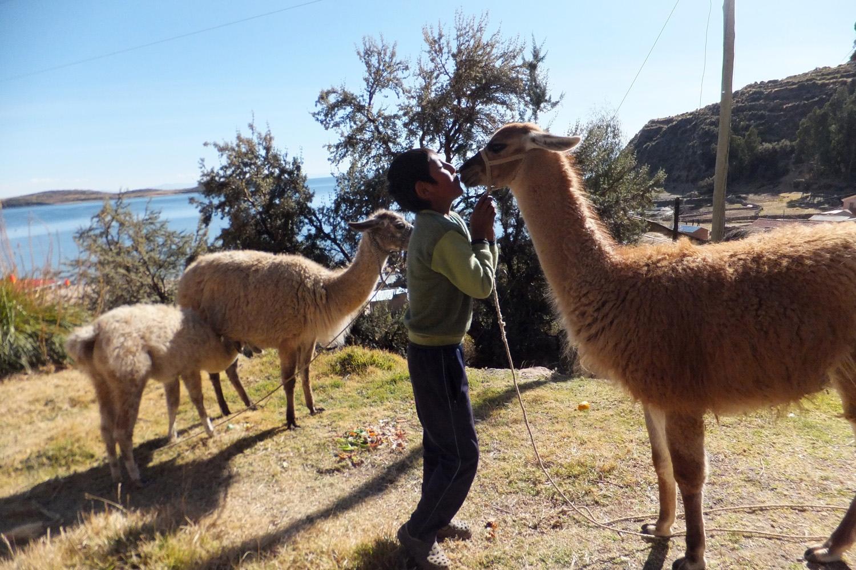 Son mi llama Munchi y mi hijo Aymar. A la llama le gusta dar besos en la cara…siempre cuando estás cerca te da un beso en la cara, es cariñosa.