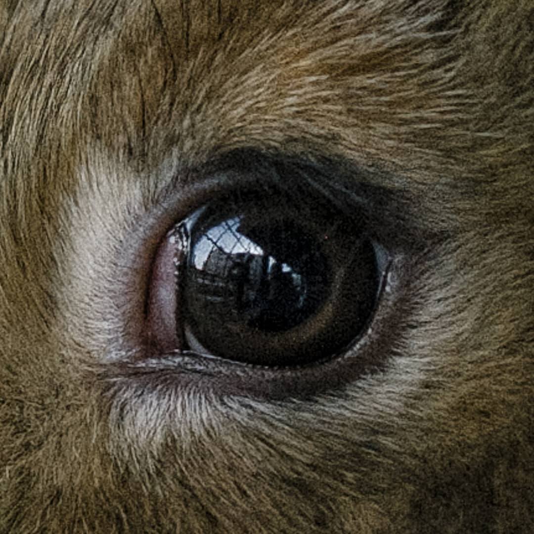 Caged Palestinian rabbit