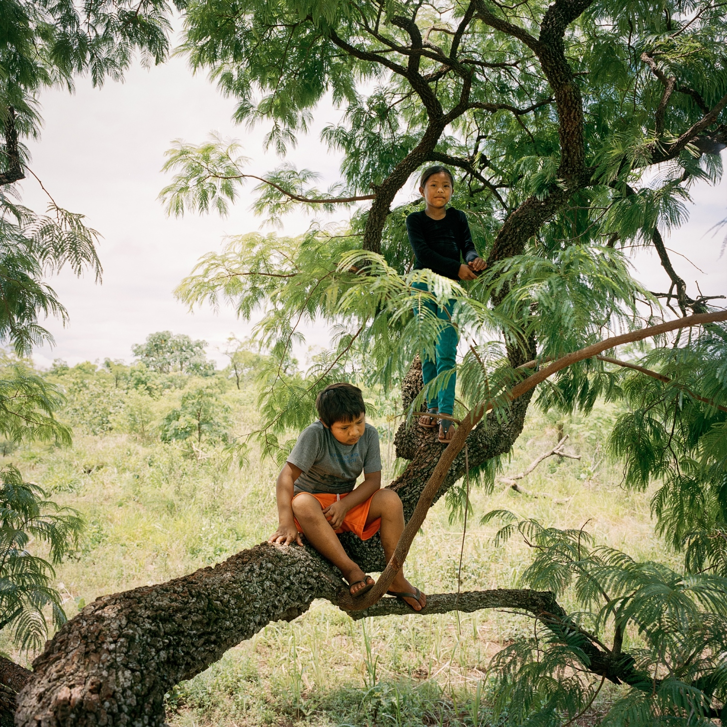 November 29, 2016. Alisson Ortis, 8, left, and Nicole Samoiri Martin, 8, play in a tree in their yard in Amambai Reserve. Nicole lost her father Nivaldo Chara Martin, 42, and brother Michelleu, 15, to suicide in the Guarani-Kaiowa Amambai Indigenous Reserve in Matto Grosso Du Sul, Brazil.