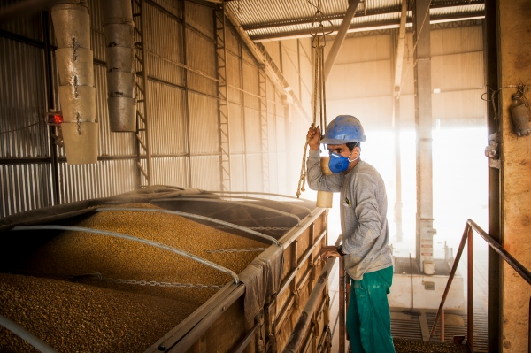 A worker fills trucks with corn kernals at Japuíra soy farm in Nova Mutum, Mato Grosso state. The BR-163 is a major soy corridor.