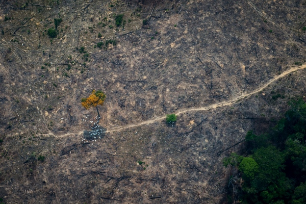 Deforestation is seen from the air near the BR-163 near Itaituba, Para state, Brazil.