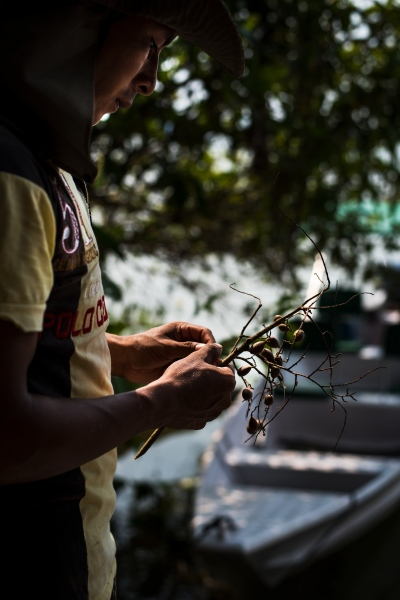 A young Munduruku man from the Village of Sawre Muybu eats a local fruit near the Tapajos River. The Munuduku are fighting to protect their land from hydroelectric development, deforestation and illegal gold mining.