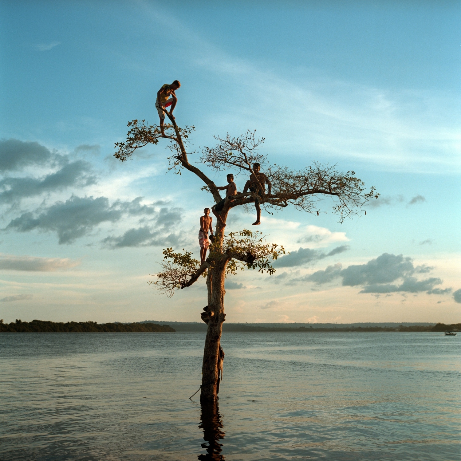 2014. A group of boys climb a tree on the Xingu River by the city of Altamira, Brazil. Today, one third of the city has been permanently flooded by the nearby Belo Monte Dam displacing over 20,000 people while impacting numerous indigenous and riverine communities in the region./Aaron Vincent Elkaim