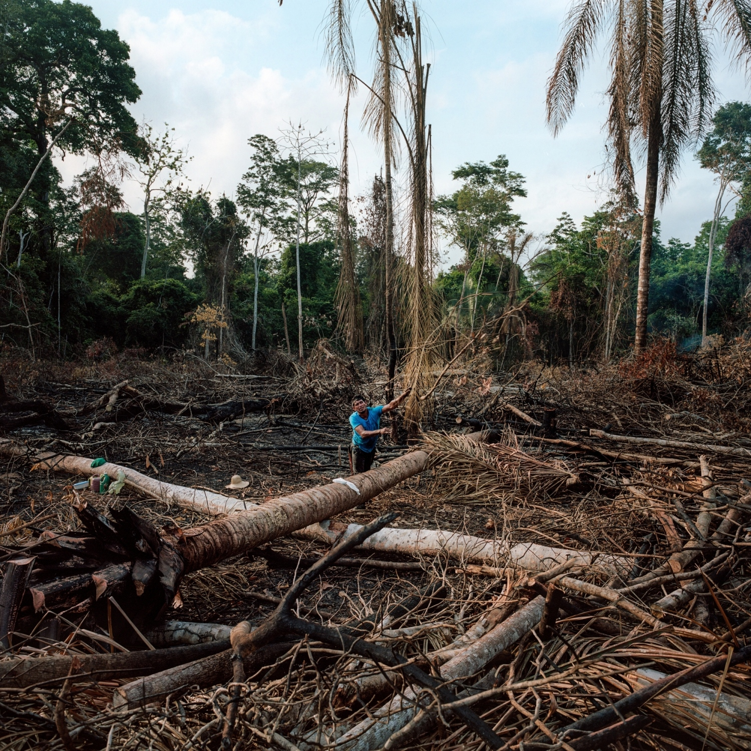 "2016. Pedro Vianna of the Juruna tribe, clears trees in a slash and burn in order to plant corn on the Paquiçamba indigenous territory. The Juruna live on the islands and banks of the Volta Grange or Bing Bend of the Xingu River. They are known as ""proprietors of the river"" for their great ancestral knowledge of its flow, and for having migrated for centuries from the mouth of the Xingu to its headwaters. The Paquiçamba indigenous territory, sits roughly 10 km below one of Belo Monte's reservoirs which has restricted the flow of water on the Volta Grange impacting their traditional fisheries.  As a recourse to the disruption in their economy Norte Energia has advised the tribe to plant corn to both feed chickens for the community and to sell at market.  /Aaron Vincent Elkaim"